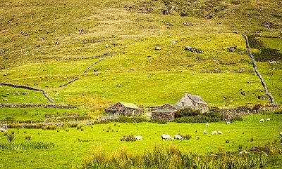 Irische Farm - p815m1503507 von Erdmenger