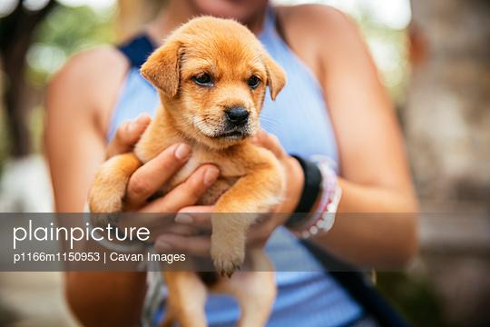 p1166m1150953 von Cavan Images