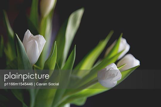 p1166m1545446 von Cavan Social