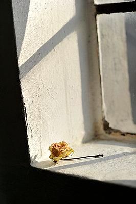Verwelkte Rose - p949m856269 von Frauke Schumann