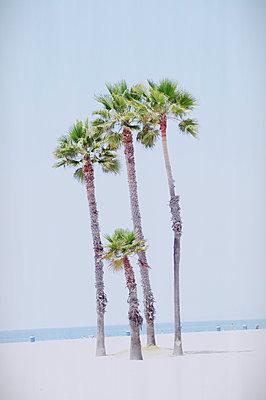 Palmen am Strand, Kalifornien, USA - p1190m2183776 von Sarah Eick