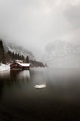 Schwan im See vor einem nebelverhangenem Gebirge - p1383m1333036 von Wolfgang Steiner