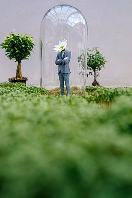 Businessman figurine with flower head standing park under bell jar - p300m2058894 by Flamingo photography