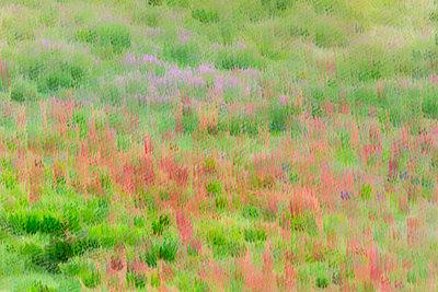 Field of flowers - p745m889583 by Reto Puppetti