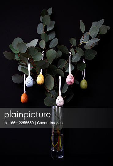 Eucalyptus branches decorated with colored eggs in vase on black - p1166m2255659 by Cavan Images