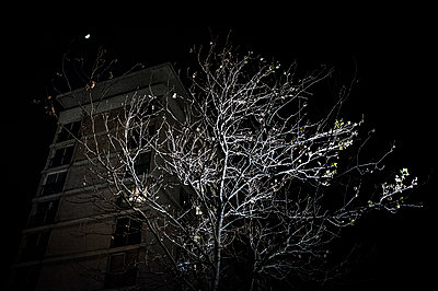 Tree in the night - p1007m1134148 by Tilby Vattard