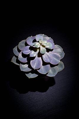 Succulent - p1149m1203445 by Yvonne Röder