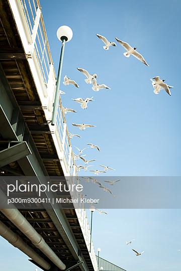 Germany, Mecklenburg-Western Pomerania, Heringsdorf, Jetty, Seagulls, Laridae, flying - p300m930041f by Michael Kleber