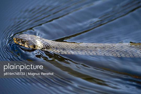 p816m745733 von Magnus Reneflot