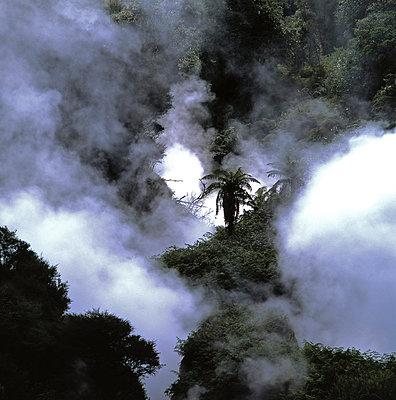 Urwald in Neuseeland - p1016m766998 von Jochen Knobloch