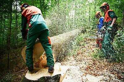 Forestry - p1203m1025861 by Bernd Schumacher