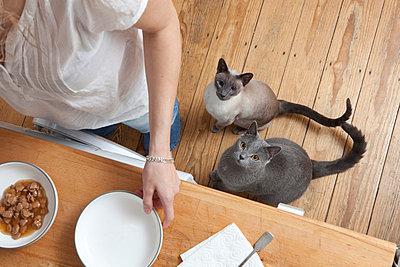 Katzen versorgen - p7750148 von angela pfeiffer