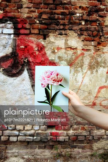 Photograph of peony against brickwork - p1017m2221821 by Roberto Manzotti