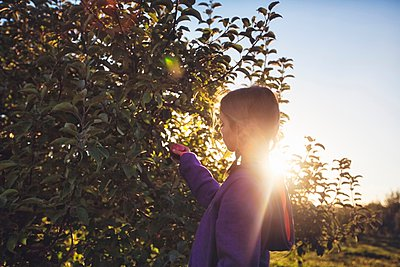 Side view of girl in orchard picking apple from tree - p924m1094815f by Rebecca Nelson