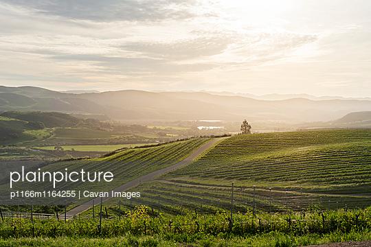p1166m1164255 von Cavan Images