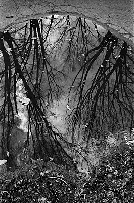 Reflection in Puddle - p1131m938956 by Charles Klein