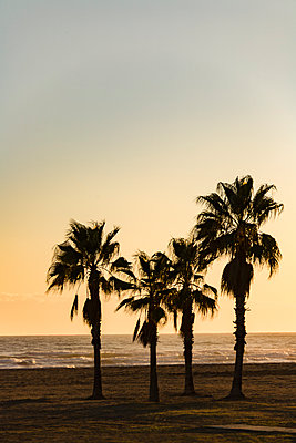 Spain, Palms on the Beach - p280m2253492 by victor s. brigola