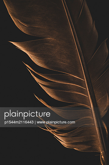Feather - p1544m2116443 by