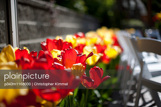 p343m1168000 von Christopher Kimmel