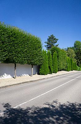 Hedge - p1657m2248629 by Kornelia Rumberg
