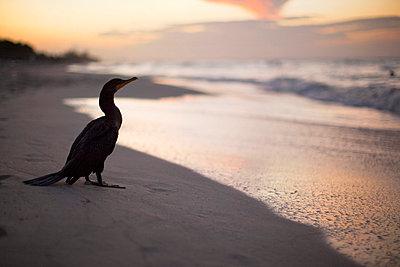 Vogel am Strand - p3227309 von Simo Vunneli