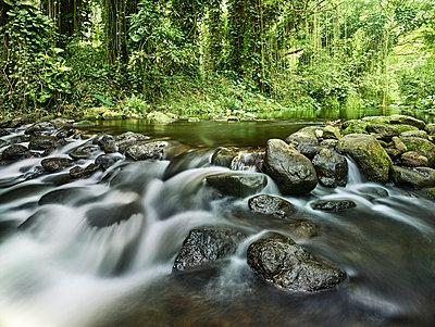 Stream flowing through rocks in rainforest at Waipio Valley - p300m2131790 by Christian Vorhofer