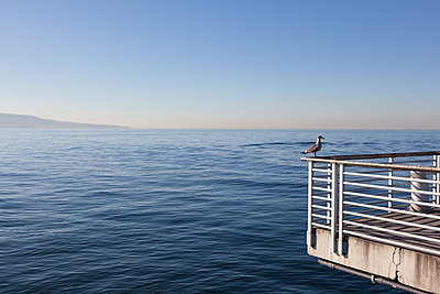 Möwe auf einem Geländer an der Küste - p712m1466320 von Jana Kay