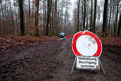 Holzfaeller, Waldarbeit - p979m909834 von Dott