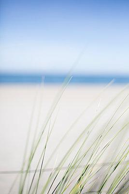 Sommer an der Ostsee - p1325m1222935 von Antje Solveig