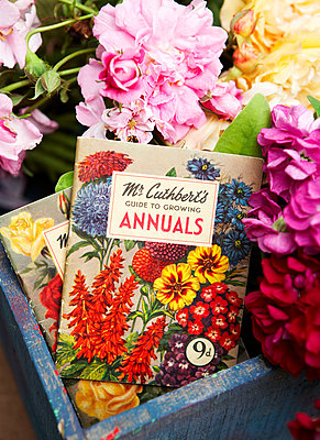 Cut flowers in blue crate with gardening book;  Isle of Wight;  UK - p349m920069 by Rachel Whiting