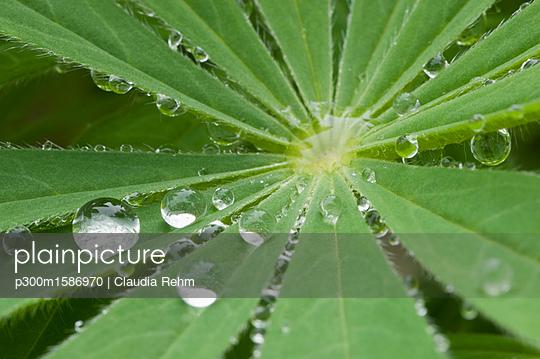 Raindrops on leaf, close-up - p300m1586970 von Claudia Rehm