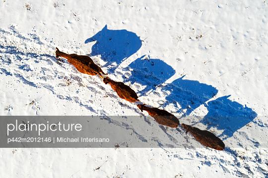 p442m2012146 von Michael Interisano