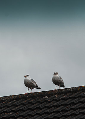 Two seagulls on the rooftop - p1681m2283679 by Juan Alfonso Solis
