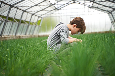 Boy crouching in greenhouse, examining chives - p300m2197347 by Stefanie Aumiller