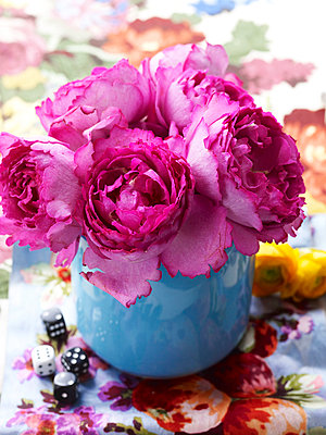 Bright pink flowers in blue vase with dice - p349m2167656 by Polly Wreford