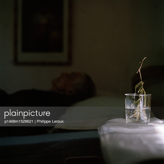 Twig with it roots in a glass of water - p1468m1528621 by Philippe Leroux
