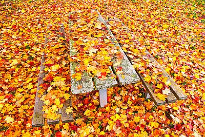 Tisch Sitzbank - p1205m1515874 von Toni Anzenberger