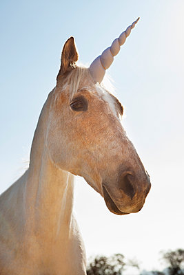 Unicorn outdoors - p555m1419607 by Lucy von Held