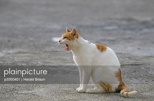 Little cat in Greece
