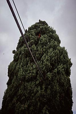Baum - p1164m1584644 von Uwe Schinkel