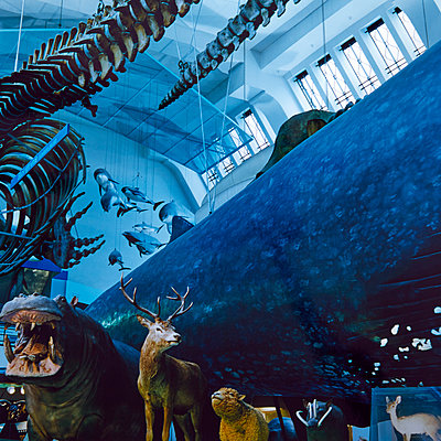 Variety of exhibits, Museum of Natural Science - p1299m2284942 by Boris Schmalenberger