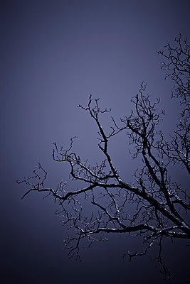 Branches - p248m898653 by BY