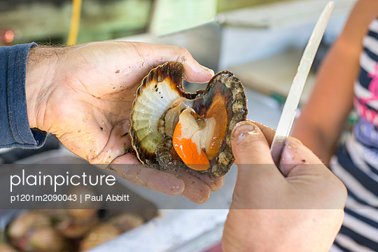Man opening freshly caught scallop with knife - p1201m2090043 by Paul Abbitt