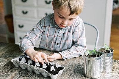 Five year old boy starting jalapeño seedlings. - p1166m2171524 by Cavan Images