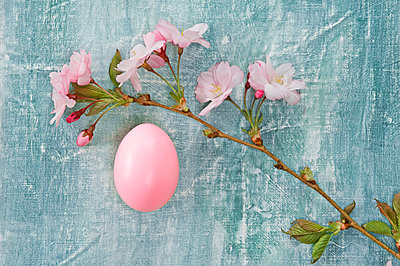 Pink branch of cherry blossoms and pink Easter egg - p300m2102537 by Achim Sass