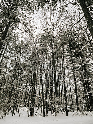Low angle view of bare trees in forest during winter - p1166m1566853 by Cavan Social