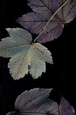 Dunkler Herbst - p454m2141537 von Lubitz + Dorner