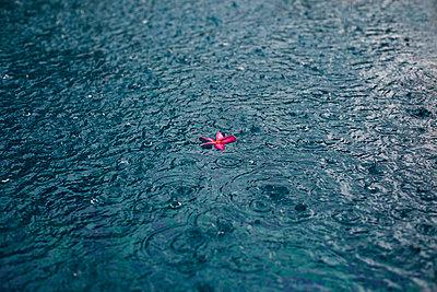 Blüte auf dem Wasser - p586m859196 von Kniel Synnatzschke