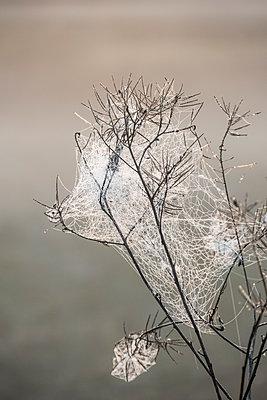 Spinnennetze - p739m1170271 von Baertels