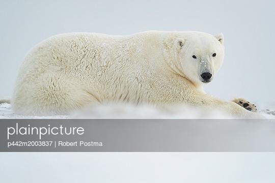 p442m2003837 von Robert Postma